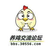 爱鸡论坛app