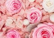 情人节送什么颜色花好?情人节送什么颜色玫瑰好?