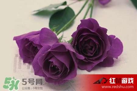 12朵紫玫瑰花语_12朵紫玫瑰代表什么十二朵紫色玫瑰代表着怎样的意义?