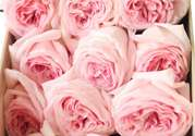 roseonly鲜花怎么保养?roseonly永生花怎么保养?