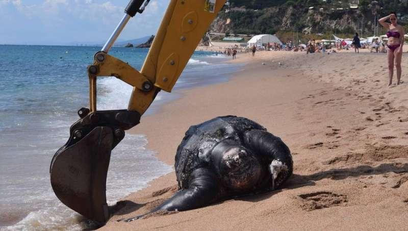 海龟误食塑料死亡  呼吁人类不要在海洋随意丢弃垃圾