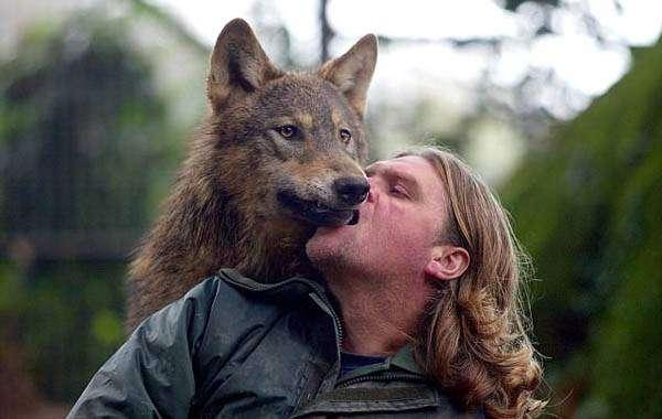 英国狼人 因饲养狼遭邻居抱怨 转养混血狼